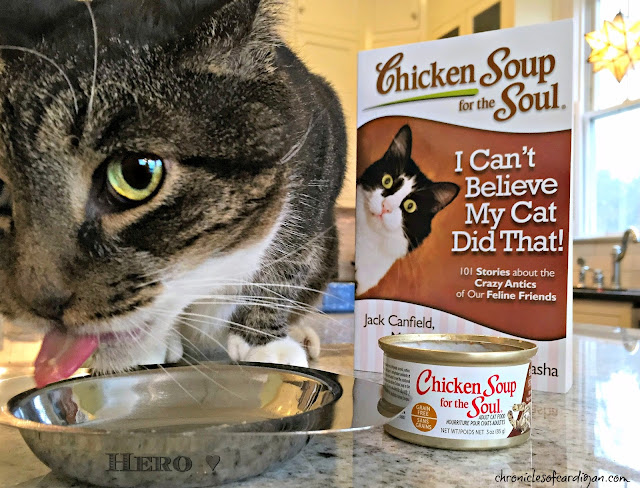 cat eating Chicken Soup for the Soul canned cat food beside Chicken Soup for the Soul I Can't Believe My Cat Did That book