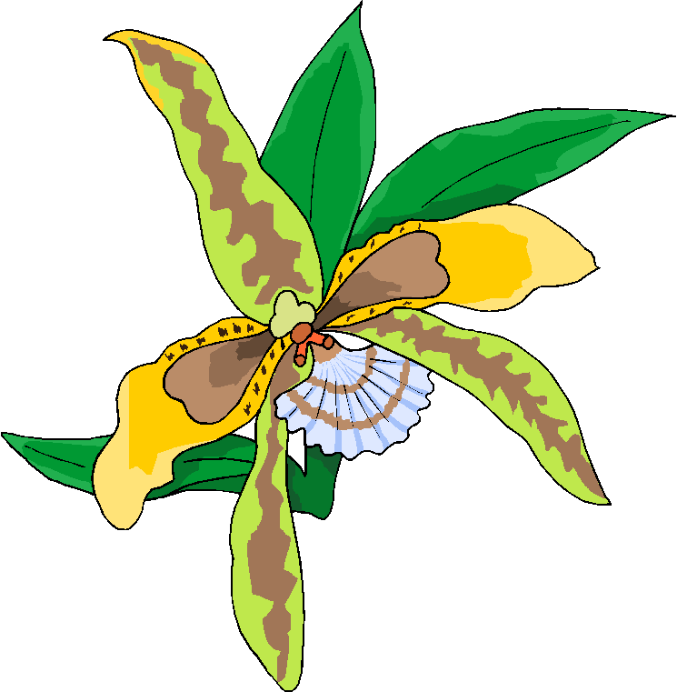Yellow Orchid Flower Clipart