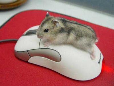 Funny Mouse Operating Mouse