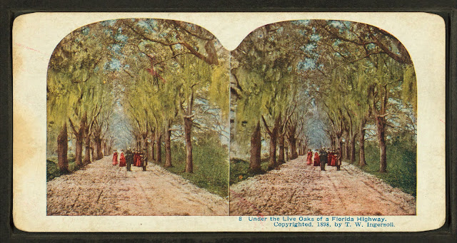 Under the live oaks of a Florida Highway. Stereoscopic viewer image. Photo courtesy Wikimedia Commons.