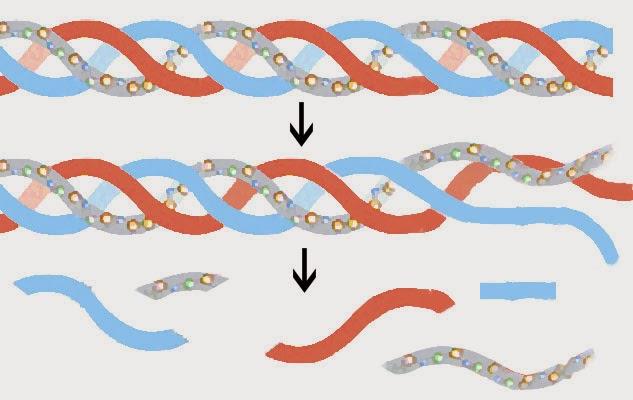 Cách tự tạo collagen tự nhiên chống lão hóa