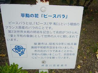 神戸市立 須磨離宮公園・平和の花『ピースバラ』