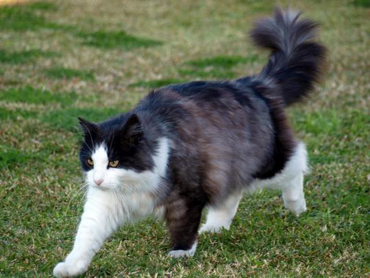 Cat from Stockton Australia