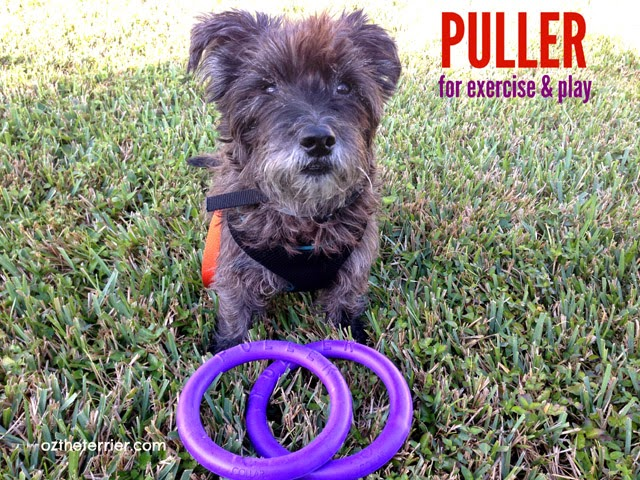 Oz the Terrier PULLER Interactive Device for Dogs