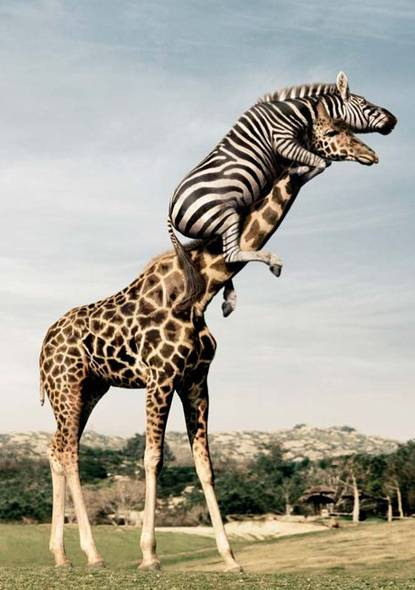 Funny wild animals lifting one another