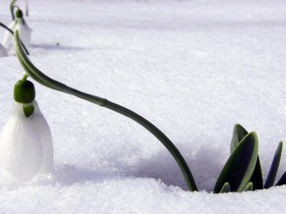 Plantas y flores plantas especies plantas de exterior - Plantas de exterior resistentes al frio ...