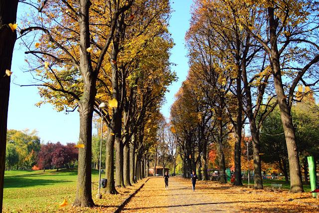 Viale alberato autunnale al parco della Pellerina di Torino