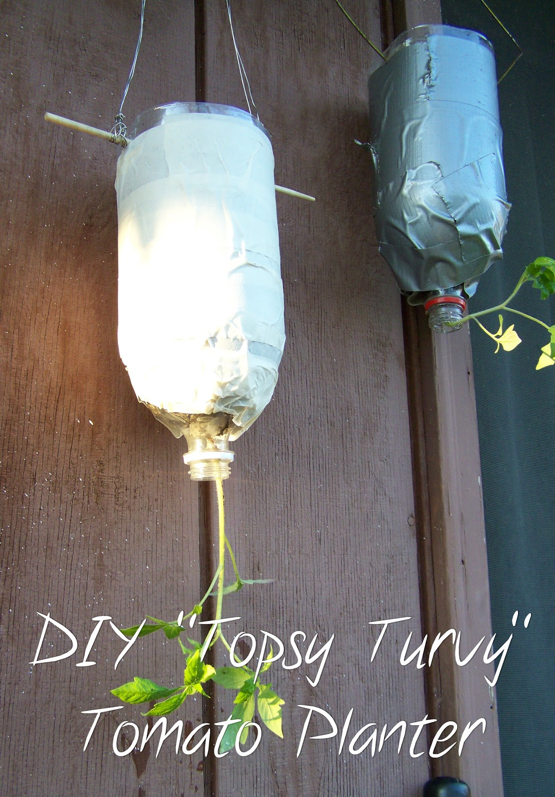 "Do It Yourself ""Topsy Turvy"" Tomato Planter"