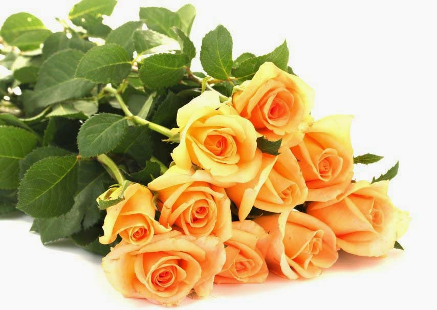 orange-rose-flowers-petals-leaves-hd-image