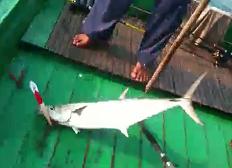 Gila Mancing ~ Trolling Ikan Tenggiri