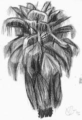 Palm tree, 1984+
