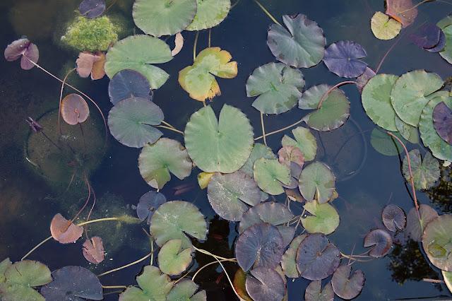 Shady lakes albuquerque, albuquerque shady lakes, shady lakes, ponds in albuquerque, family photographers in albuquerque, maura jane photography. children photography. family photoshoot ideas, family photos, family photographer new mexico
