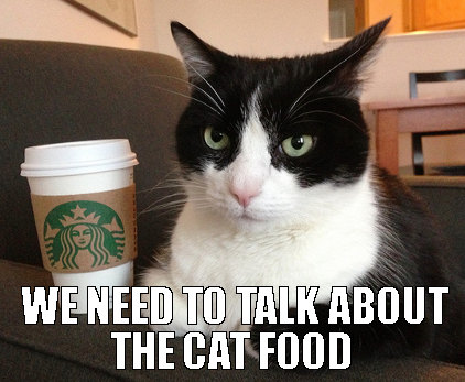basic cat talk a few minutes about the catfood mobile casino cat meme great cats be funny blog 2015,Food Cat Meme