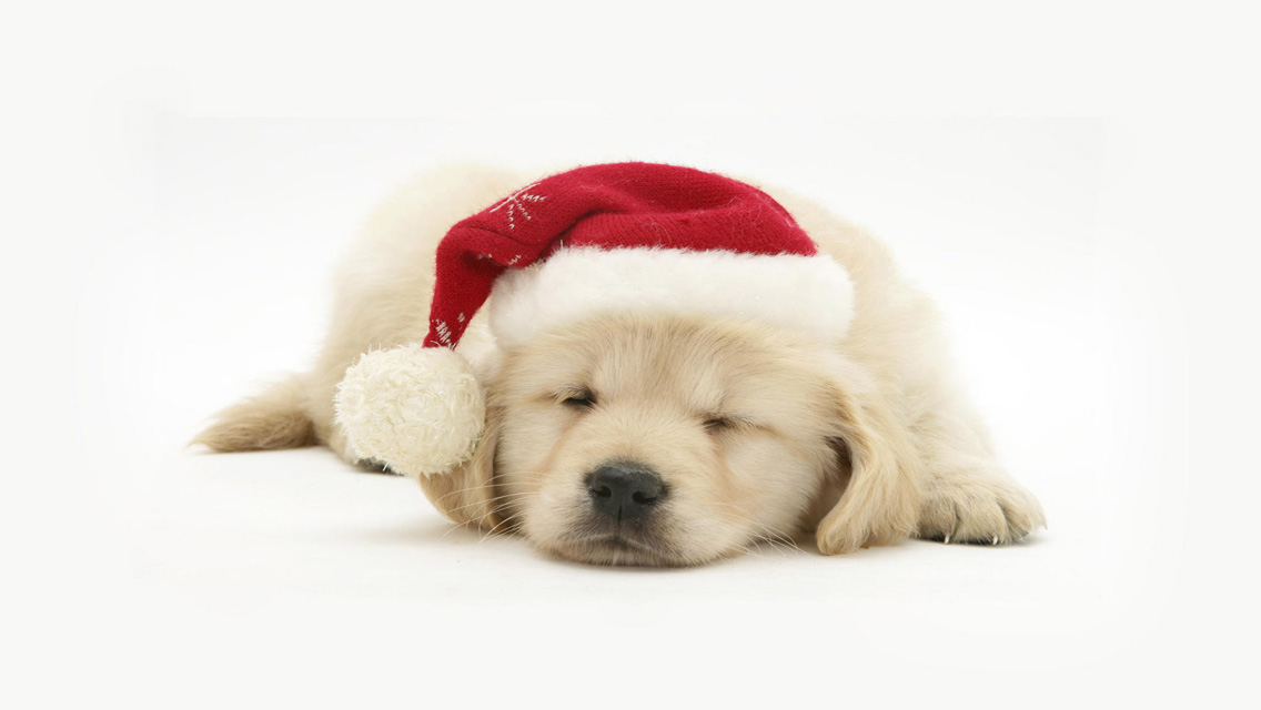 Christmas Puppy Golden Retriever Dog Wallpaper Desktop HD