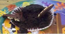 Fern Smith's Classroom Ideas: Tuesday Teacher Tips: Halloween Fun At School with Bat Cupcake Directions