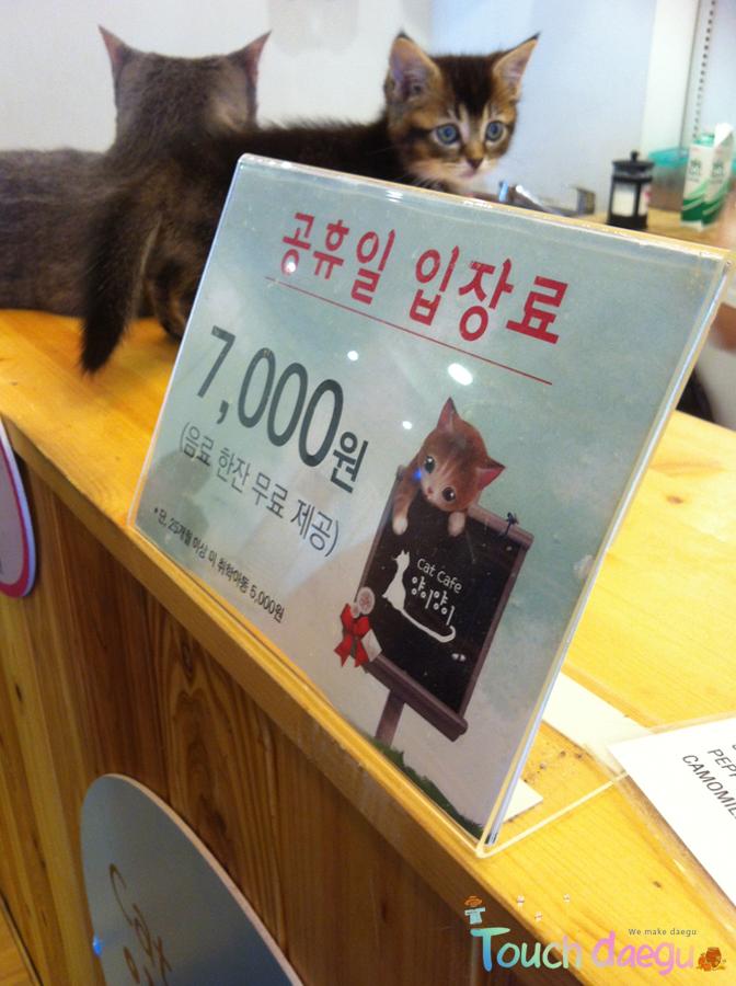Cafe Yang-E in Dongseong-ro, Daegu