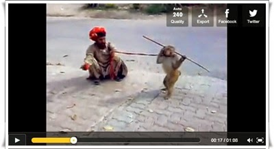 http://funkidos.com/videos-collection/funny-videos/funny-monkey-dance