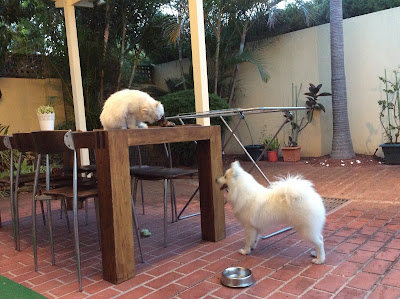 G can't reach cat on table