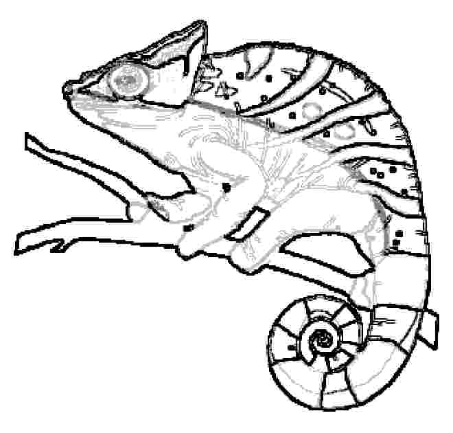 Chameleon coloring pages to printable for Lizard coloring pages