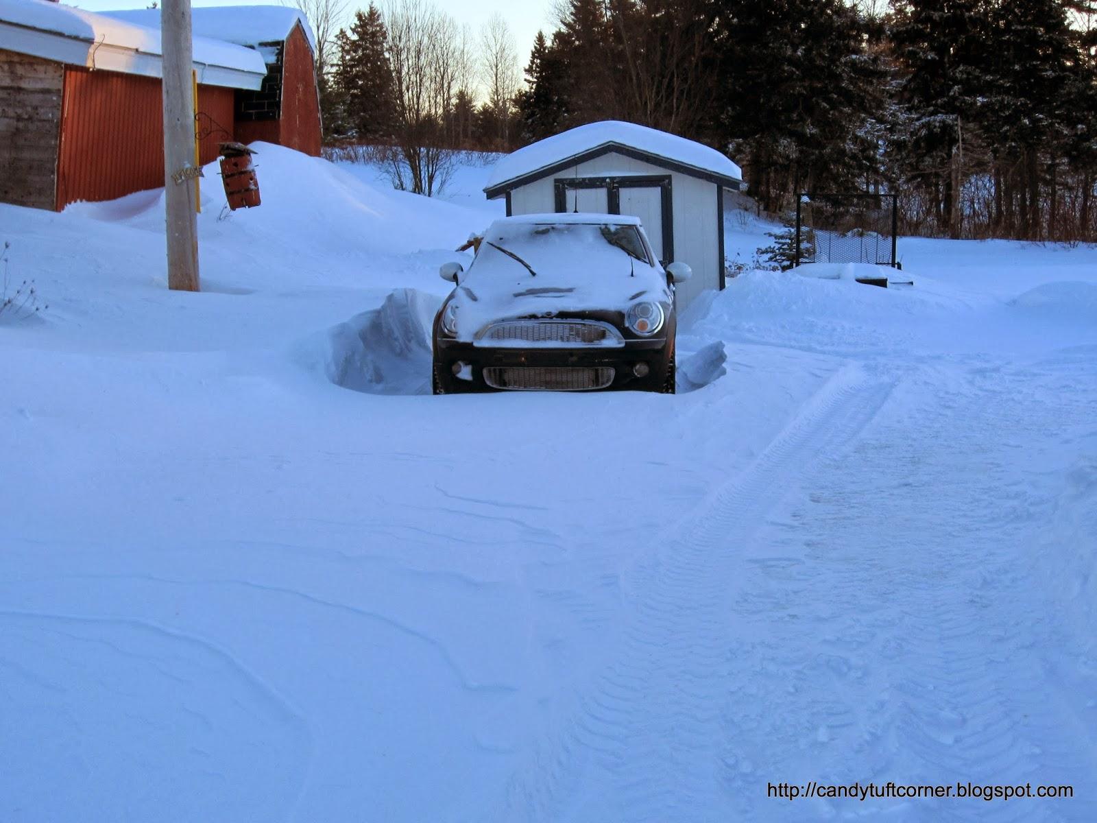 Real Snow Began After Dark >> Candytuft Corner January 2014