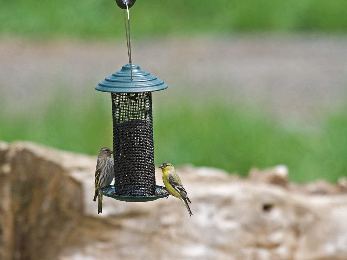 attract birds to your backyard part 3 styles of bird feeders