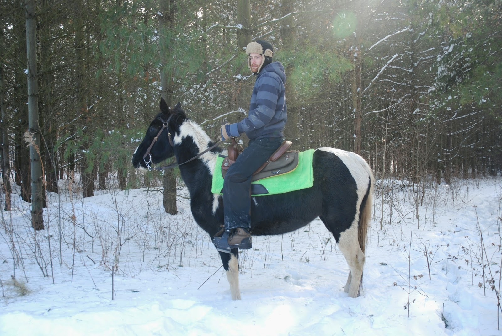 Canadian Trail Horses For Sale - Tennessee Walking Horses Spotted Saddle Horses - Safe for Beginner Riders, Timid Riders & Children - Glen Huron, Ontario, Canada - Also advertised in Toronto on Horsetopia, Horseville, EquineHits, EquineConnection, Kijiji, horseweb, horseclicks, myhorses, trail horses ontario, trail horses canada, trail horses for sale, elite equine, knox equine, canadian trail horses, , horse training buysell, horsesincanada, equinenow and more! Windsor Toronto London