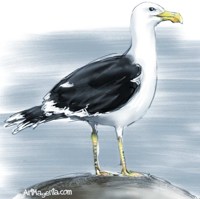 Black-backed Gull  sketch painting. Bird art drawing by illustrator Artmagenta