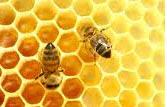 Bálsamo de labios con miel