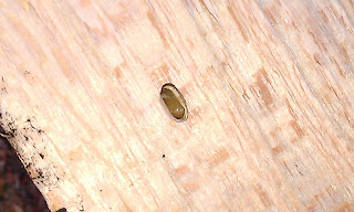 Larvae Poking Through Hole
