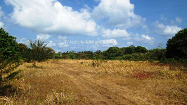 Padang Ilalang di Karimunjawa