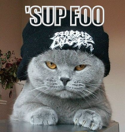Funny-Pictures-of-Cats-With-Captions-gangster-cat.jpg