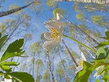 Vuoden Luontokuva 2012