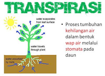 transpirasi