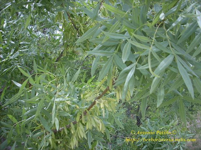 Hierbas y plantas medicinales para qu sirven hierbas for Hierbas y plantas medicinales