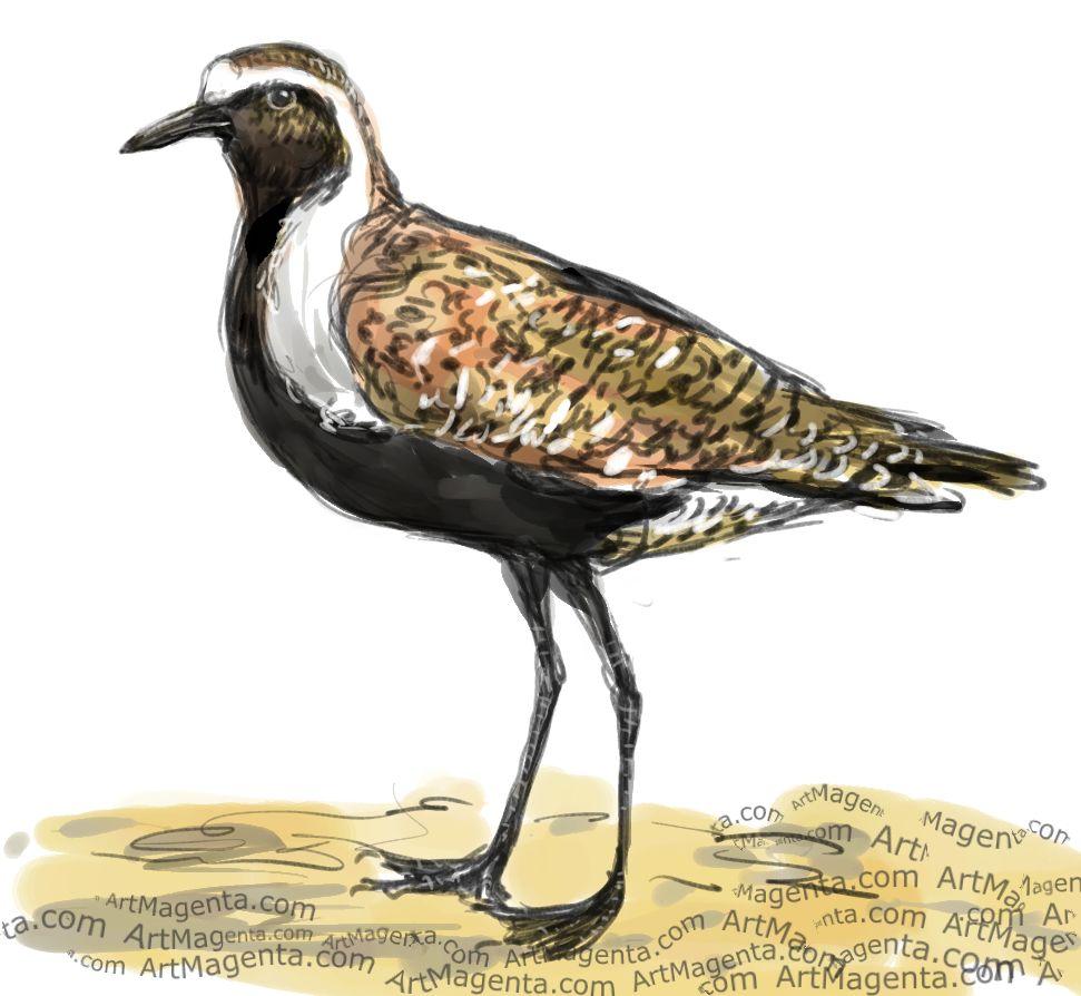 En fågelmålning av en ljungpipare från Artmagentas svenska galleri om fåglar