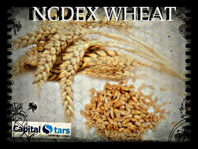 NCDEX wheat , wheat Future Trading tips , free agri calls, Agri Commodity Tips