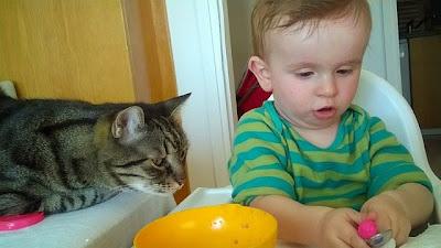 Bir Annenin Blogu - Kediye yemek hazırlayan çocuk