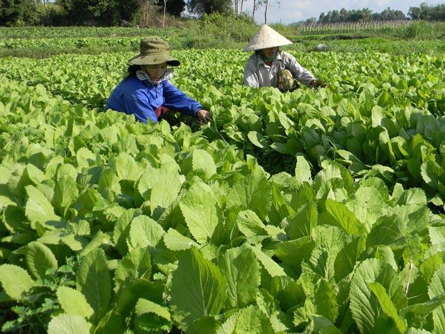 TP.Quảng Ngãi: Phấn đấu năm 2020 hoàn thành nông thôn mới