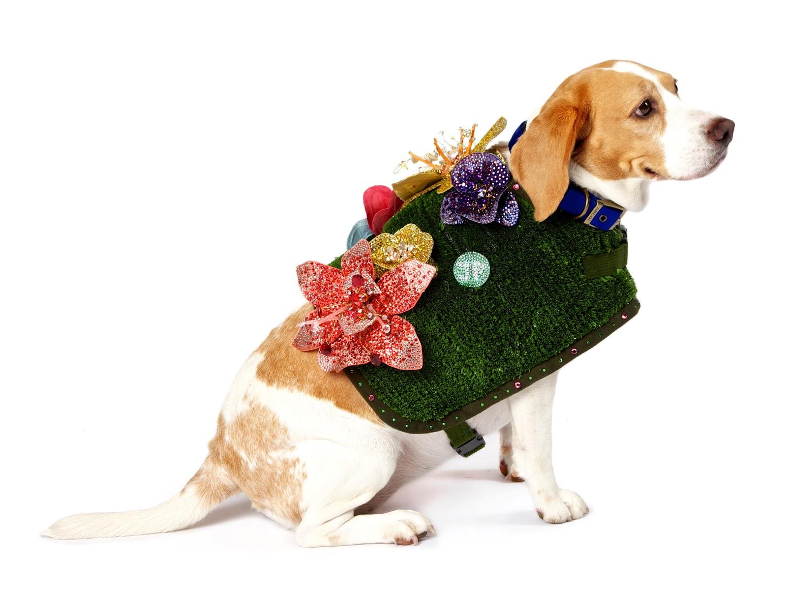 http://2.bp.blogspot.com/-IcRD3j_vBRg/UIAdnbtP5GI/AAAAAAAAP9I/NAbhF05f3GI/s1600/Frankie+in+Jenny+Packham+Battersea+dogs+home+dogwalk.jpg