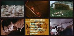 Vidéo : Ces animaux malades de l'homme