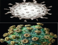 Pengertian serta ciri-ciri dari Virus