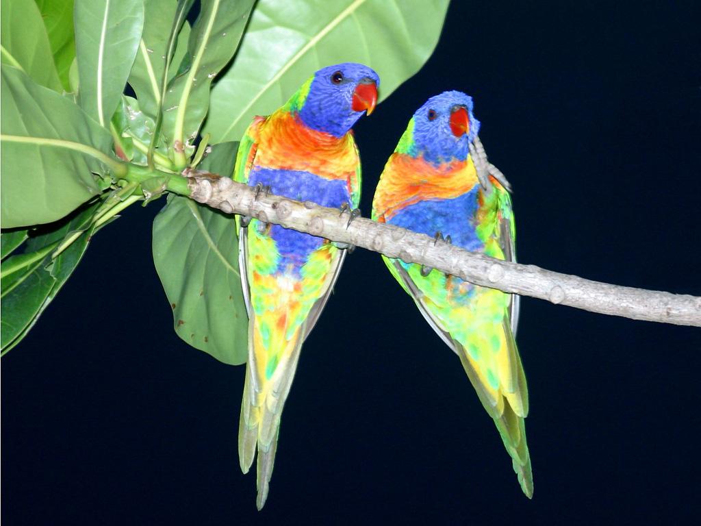 Birds Wallpapers For Desktop