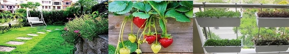 Hướng dẫn chi tiết cách trồng rau sạch tại nhà