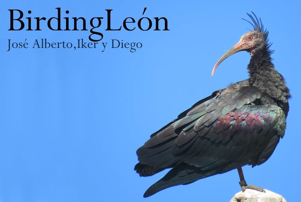 JOSE ALBERTO, IKER y DIEGO BirdingLeón