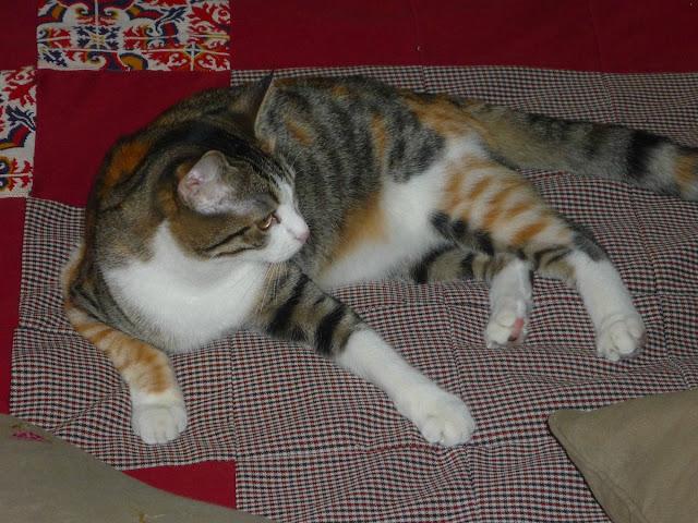 funny cat pictures, beautiful cat