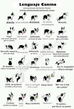 Diccionario perruno - click para agrandar