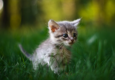 Beautiful Cute Baby Animals Photos