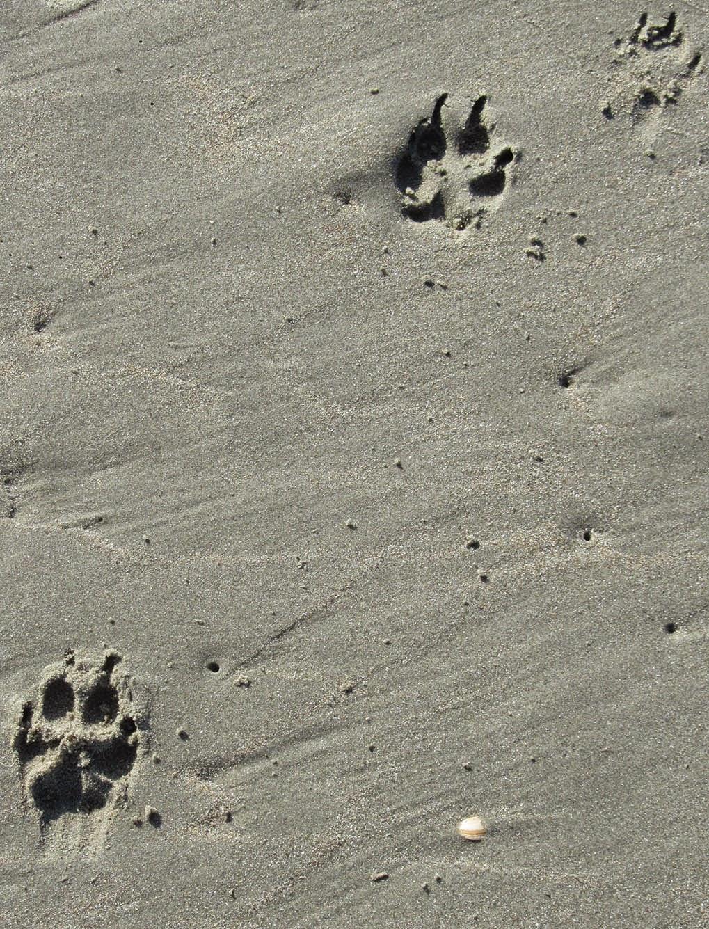 three paw prints