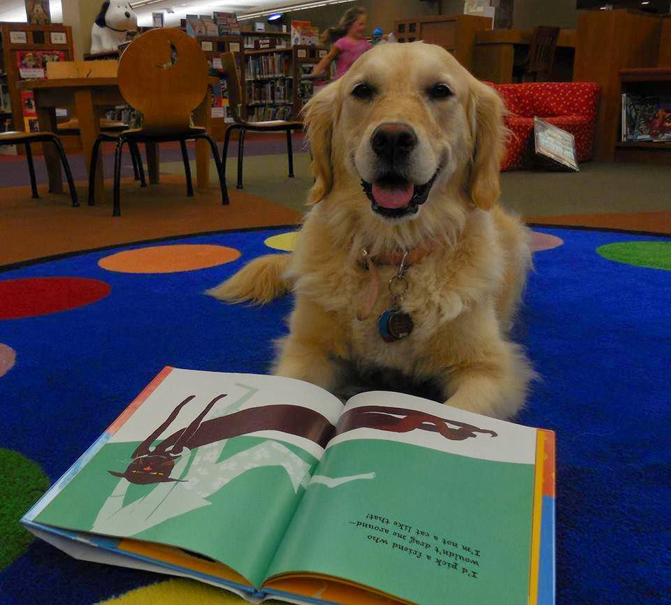My Cousin Mary Jo And Her Sweet Dog Molly Volunteer In The Paws For Tales  Program At The Weyershilliard Library In Green Bay, Wisconsin