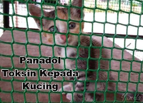 Panadol merbahaya kepada kucing, kesan panadol terhadap kucing, cara merawat kucing, cara sembuhkan kucing sakit, panadol tidak sesuai rawat kucing, panadol jadi toksin, panadol punca kematian kucing, hantar kucing ke veterinary dan klinik haiwan, cara ubati kucing